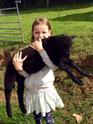 Evie with our sock lamb