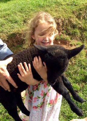 Granddaughter Poppy with our sock lamb