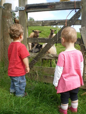 Our grandson Sam shows his friend the sheep